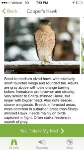 The app also has bird sounds which can help identify the bird as well!
