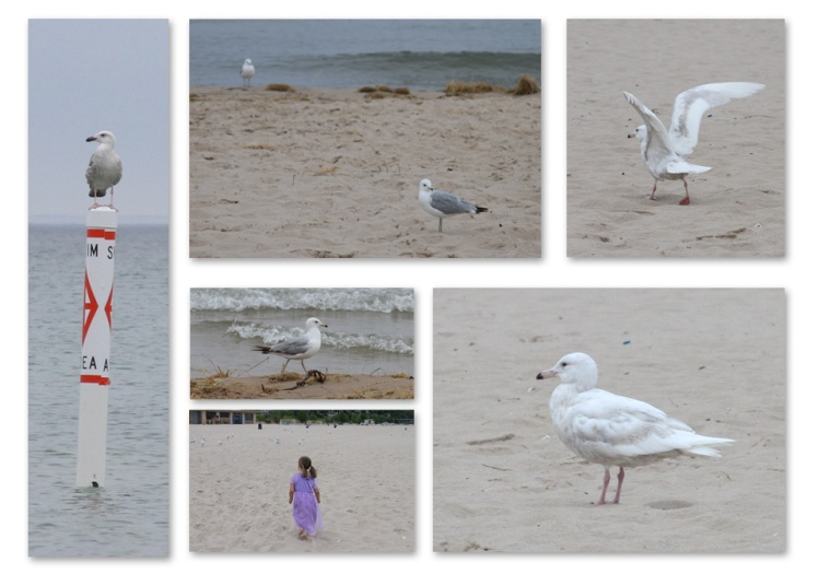 Grand_Haven_Gulls_Michigan