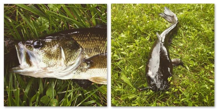 pond_fish