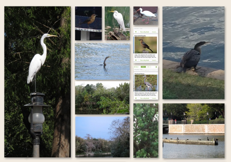 disney_birds
