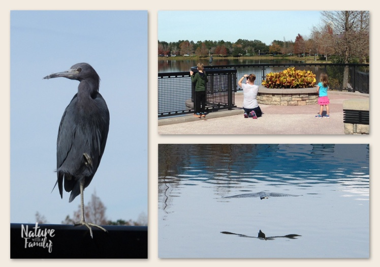 little_Blue_Heron_disney